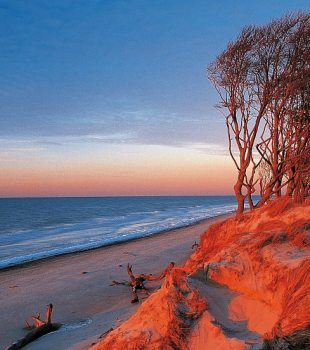 Trees grown with the wind bathed in a red morning glow at Darßer Weststrand, Fischland-Darß-Zingst, © TMV/Grundner