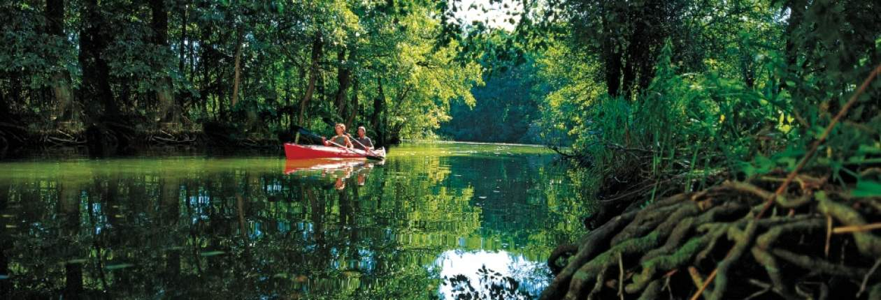 The unspoilt landscape of the River Peene turns a canoe tour into a special experience of nature, © TMV/Werk3