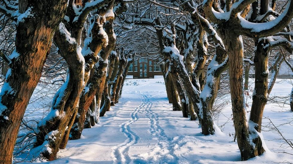 In the winter idyll, the old beech trees point the way to the Thünengut in Mecklenburg Switzerland., © TMV/Grundner